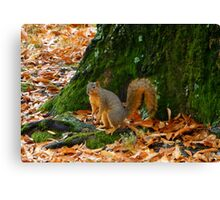 What Did You Say? Canvas Print