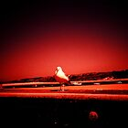Gull by presty