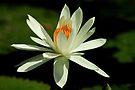 Serenity by Prasad