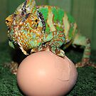 what comes first the lizard or the egg by cool3water