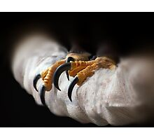 Eagle Talons Photographic Print
