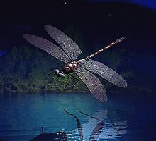 Dragonfly Reflections at Night by deleas