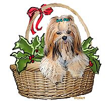 Lhasa in Christmas basket Photographic Print