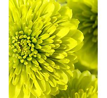 Chartreuse Photographic Print