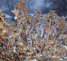 Icy leaves by Lynette46