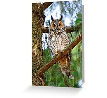 LEO - Long Eared Owl - Ottawa, Ontario Greeting Card