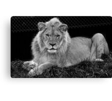 Who you looking at? Canvas Print
