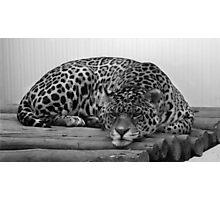 Bad Mood Cat Photographic Print