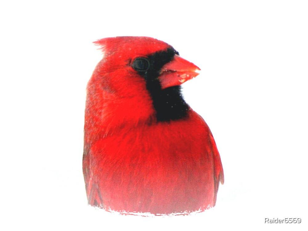 Cardinal by Raider6569