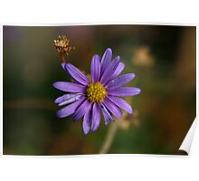 Purple Daisy Poster
