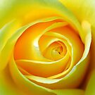 Rose :-   Joy and deep friendship  by Photography  by Mathilde