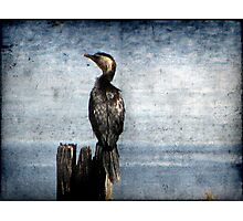 Bird Watching Photographic Print