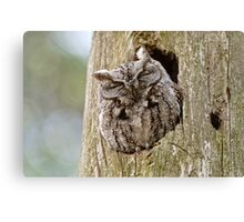 Sleeping Screech Owl Canvas Print