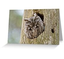 Sleeping Screech Owl Greeting Card