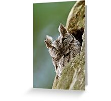 Screech Owl - Ottawa, Ontario Greeting Card