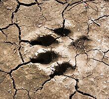 footprint by David Gallaher