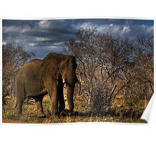 HDRI Elephant Scene Poster
