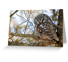 Boreal Owl Greeting Card