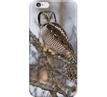 Northern Hawk Owl on branch iPhone Case/Skin
