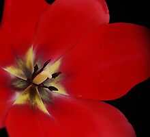Red by terrylazar