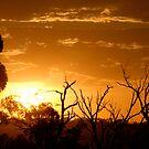 Orange Mist by GailD