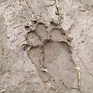 dog pawprint  by Airbrushr  Rick Shores
