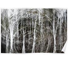 Forest Vortex... Poster