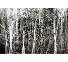Forest Vortex... Photographic Print
