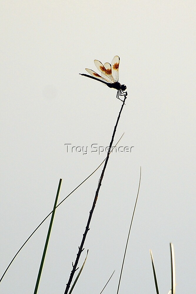 Dragonfly on White by Troy Spencer