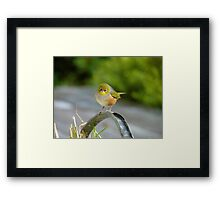I'm A Daydreamer - Silver-Eye - NZ Framed Print