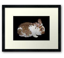 California Giant Bunny Framed Print