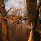 Tree Bridge by Charles Adams