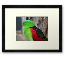 I Wear A Hi-Viz Safety Vest - Red Winged Parrot - NZ Framed Print
