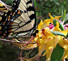 Eastern Tiger Swallowtail (Papilio glaucus) Sticker