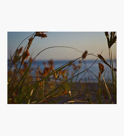 Grassy View Photographic Print