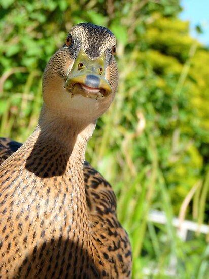 Mwah... Give Me A Kiss - Mallard Duck - NZ by AndreaEL