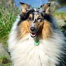 You Got To Smile Like This Lassie... - Collie - NZ by AndreaEL