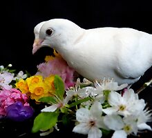 Yipee...I'ts Spring - White Doves - NZ by AndreaEL