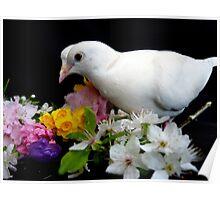 Yipee...I'ts Spring - White Doves - NZ Poster
