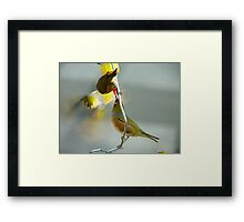 Great... Nectar From A Teat!!! - Silver-Eyes - NZ Framed Print