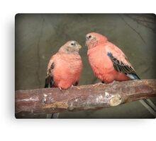 Our Adoration Speaks Volumes - Bourke Parrots - NZ Canvas Print