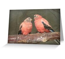 Our Adoration Speaks Volumes - Bourke Parrots - NZ Greeting Card