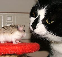 Cat And Hamster by Dfilmuk Photos