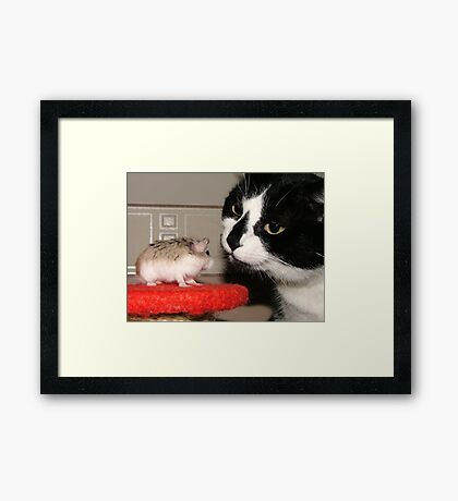 Cat And Hamster Framed Print
