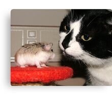 Cat And Hamster Canvas Print