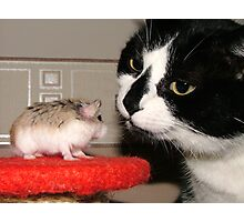 Cat And Hamster Photographic Print