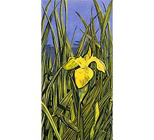 Flag Fen Iris Photographic Print