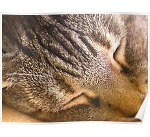 Tigris napping: face-to-TigrisFace Poster