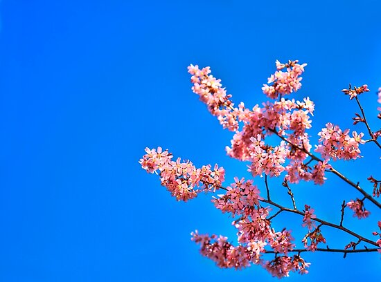 Spring Is In The Air! by Evelina Kremsdorf