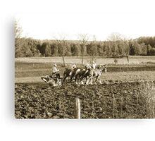 amish farmer Canvas Print